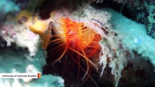 Scientists Catch Clam Flashing 'Disco Lights' When Attacked By Mantis Shrimp