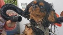 Puteaux : une station de lavage automatique pour chiens
