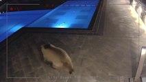 Un ours vient prendre son bain dans la piscine d'un hôtel en pleine nuit !