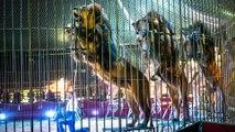 Cirques à Paris : la fin des animaux sauvages (enfin presque)