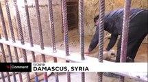 شیرها و ببرها دوستان صمیمی مرد سوری در پناهگاه حیوانات
