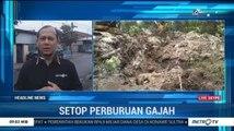 Seekor Gajah Ditemukan Mati Tanpa Gading di Riau