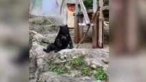 El impresionante oso kung fu te dejará loco con esta habilidad