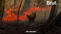 Incendies en Australie : en proie aux flammes, un koala est sauvé par une habitante