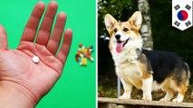 狗驅蟲藥當抗癌神藥?韓國爆紅網路偏方 讓醫師直搖頭