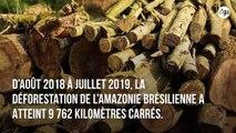 La déforestation en Amazonie au plus haut depuis 2008