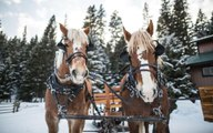 This Mountain Ranch in Montana Has the Most Magical Winter Sleigh Ride