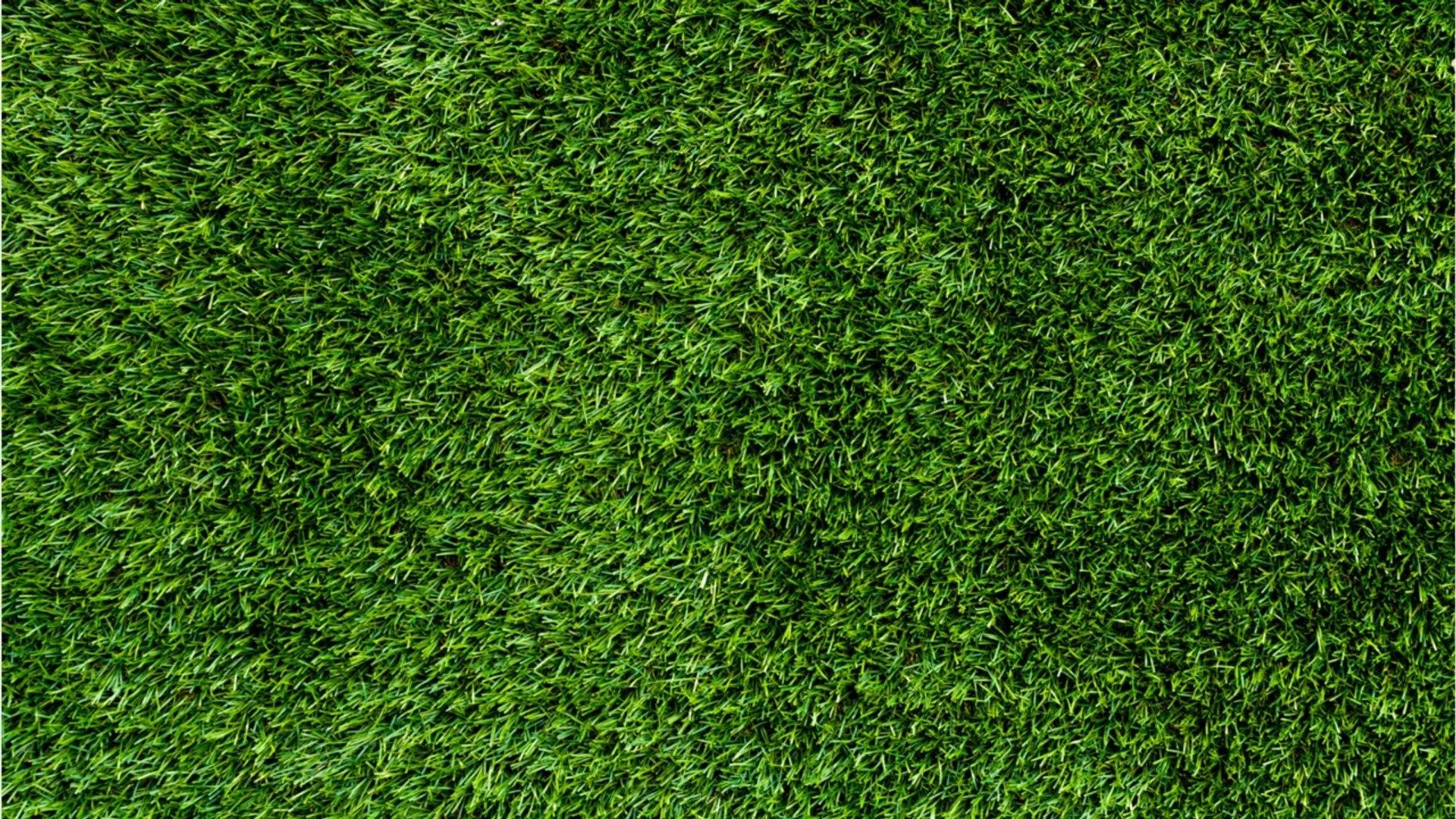 Vos Questions Jardin Comment Combler Les Trous Dans Un Gazon Fraîchement Semé