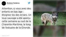 Un loup identifié en Charente-Maritime, une première dans ce département