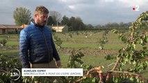 Neige dans la Drôme : les récoltes des agriculteurs sont compromises