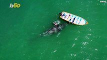 Amazing Drone Footage Captures Whale Mom & Calf Approaching a Boat to Say Hi & Be Pet