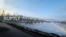 3000 rennes bloquent une route au milieu des voitures !