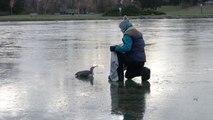 Il tente de sauver un canard piégé sur la glace