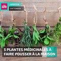 5 plantes médicinales à faire pousser à la maison #phytotherapie