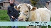 Idéale, future star du Salon de l'agriculture