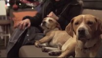 فيديو: مطعم يوناني يستضيف الكلاب الضالة ليلاً