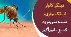 Dengue continues to attack Sindh