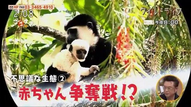 ごごナマ「フレンチ・岸本直人」 - 19.11.25