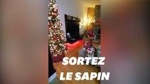 Avec #ChristmasExplosion, l'esprit de Noël déferle sur TikTok