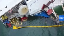 Romania working to rescue more than 14,000 sheep aboard capsized cargo ship