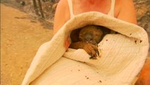 Koala rescued from Australian bush fires dies
