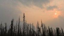Canada : un cri étrange enregistré dans la forêt affole les internautes