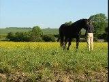 Le Percheron, un amour de cheval