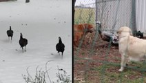 Animals Get In On The Thanksgiving Festivities