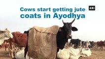 Cows start getting jute coats in Ayodhya