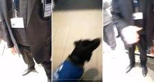 France : un chien d'assistance et son formateur recalés à l'entrée de la Fnac