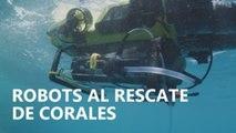 Robots al rescate de la Gran Barrera de coral