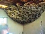 Il découvre un nid de guêpe géant incroyable