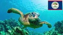 Las 5 tortugas usadas como alimento al rededor del mundo
