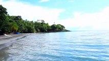 JUNGLE ON A BEACH - Tropical forest & ocean - Waves & birds Relaxing wild nature Peaceful sound plage Strand شاطئ بحر 海滩 바닷가 playa ビーチ praia пляж समुद्र तट pantai ชายหาด bờ biển spiaggia plaj Dschungel أدغال 丛林 밀림 selva ジャングル джунгли जंगल hutan ป่า hd hq