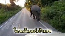 เปิดคลิป ช้างบุญช่วย โดนเจ้าหน้าที่อุทยานเอ็ด จนเดินเข้าป่าแทบไม่ทัน !