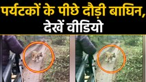 Tiger chases tourist vehicle in Rajasthan's Sawai Madhopur, Watch video | वनइंडिया हिंदी