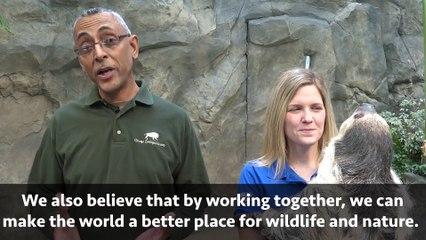 Elsie the Two-Toed Sloth & Brookfield Zoo's Animal Ambassador Program