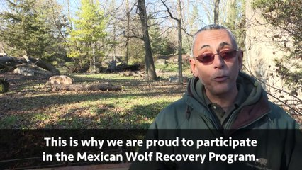 Support Brookfield Zoo & The Mexican Wolf Recovery Program