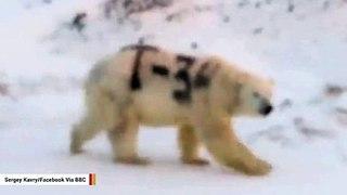 Spray-Painted Polar Bear Sparks Outrage