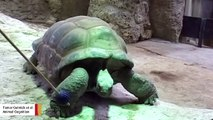 Giant Tortoises Show They Can Be Trained And Remember What They Learned