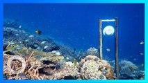 水底放健康珊瑚礁音效 竟有助珊瑚修復