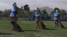 Sniffer dogs on a life-or-death mission to find explosives in Afghan capital Kabul