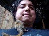 Le singe le plus petit au monde  Ouistiti pygmée