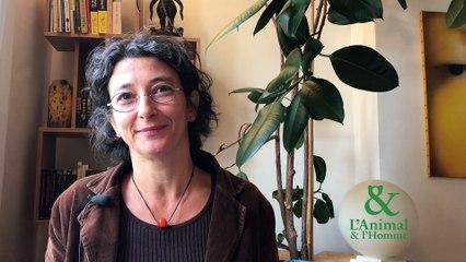 Interview 1 de Albane Gellé : La poésie du sanglier