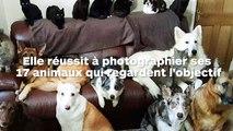 Elle réussit à photographier ses 17 animaux qui regardent droit dans l'objectif