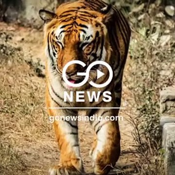 Govt Maps Out 32 Tiger Corridors To Avoid Human-Tiger Conflict