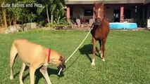 Dogs and Horses Best Friends  Cute moment Dog and Horse Compilation
