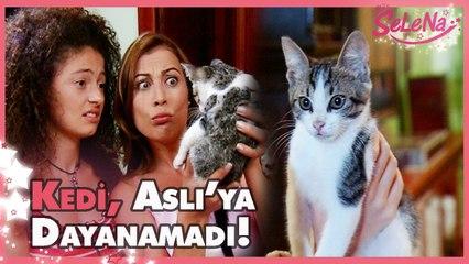 Kedi Aslı'ya dayanamıyor!