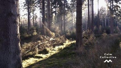 Calm Collective - Woodland Walk