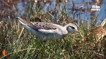 जलवायु परिवर्तन ने चिड़ियों का आकार बदला, शरीर छोटा हो रहा सिर्फ पंख बढ़ रहे